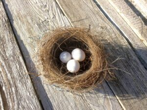 How to nurture your investment nest egg